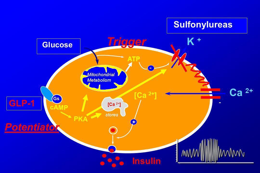 Trigger K + Ca 2+ Potentiator Sulfonylureas GLP-1 Insulin Glucose