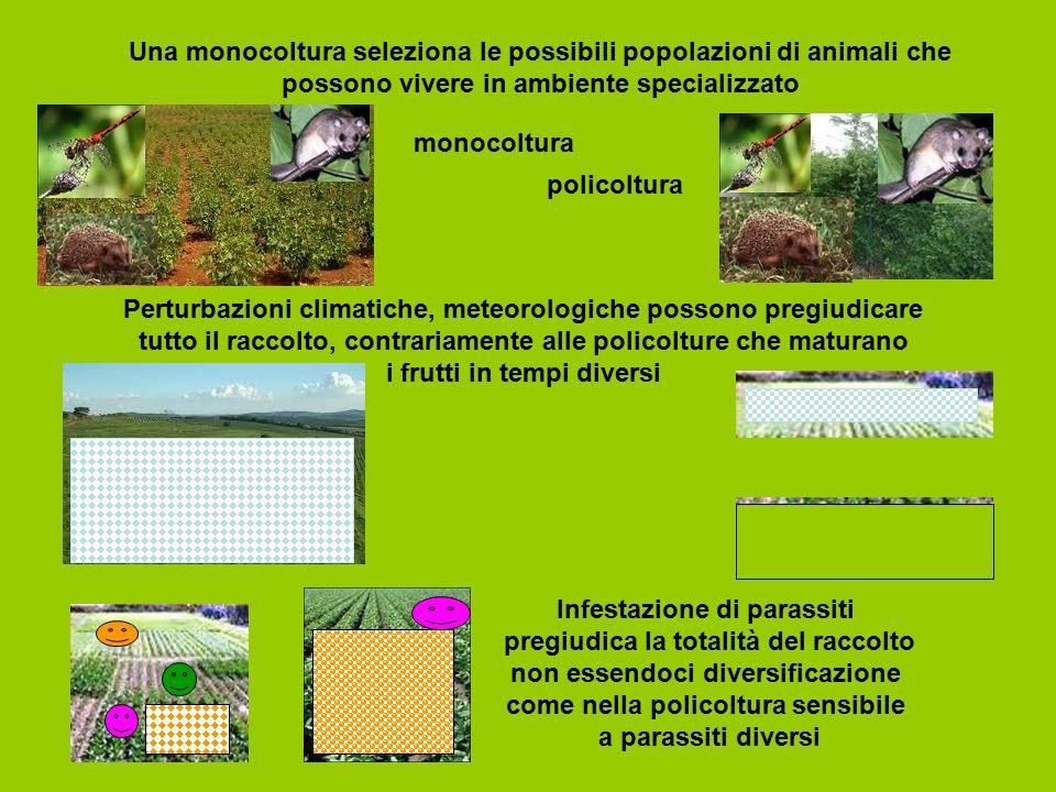 Una monocoltura seleziona le possibili popolazioni di animali che possono vivere in ambiente specializzato