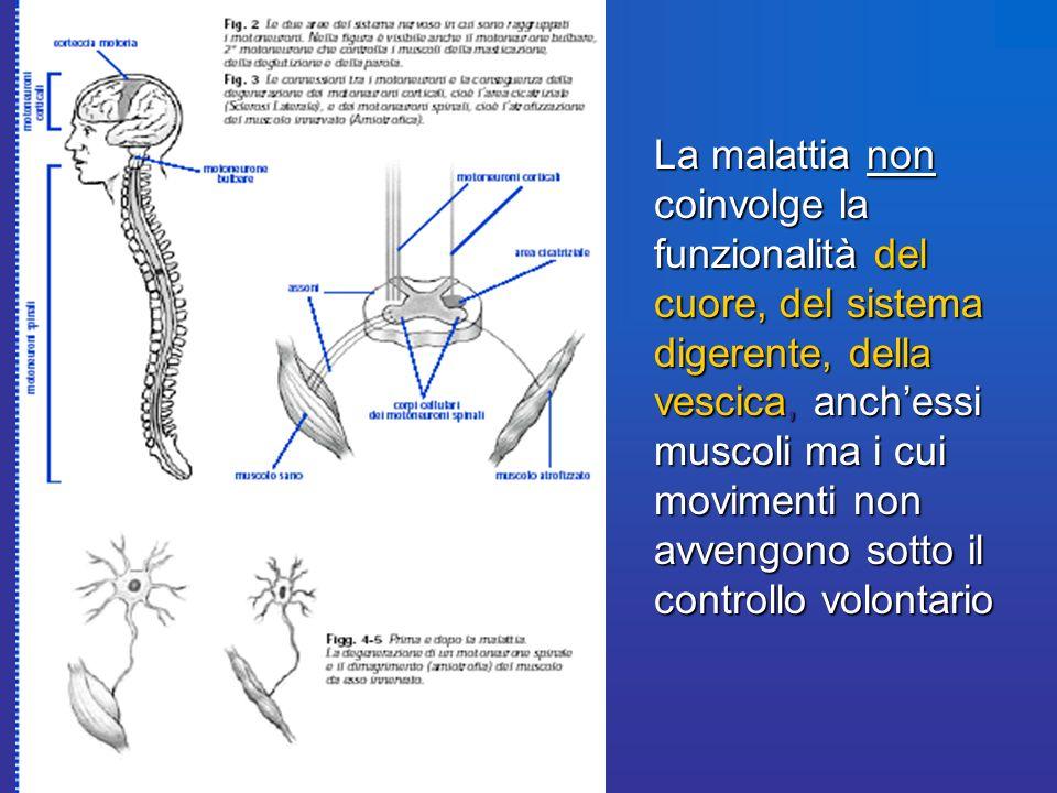 La malattia non coinvolge la funzionalità del cuore, del sistema digerente, della vescica, anch'essi muscoli ma i cui movimenti non avvengono sotto il controllo volontario