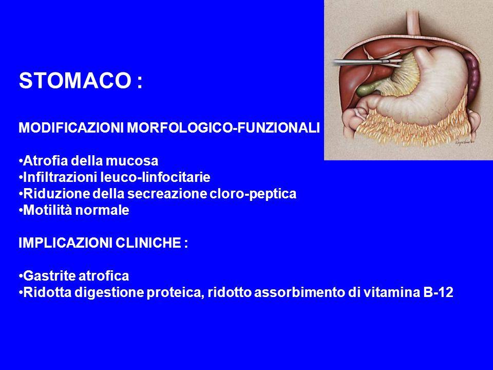 STOMACO : MODIFICAZIONI MORFOLOGICO-FUNZIONALI : Atrofia della mucosa