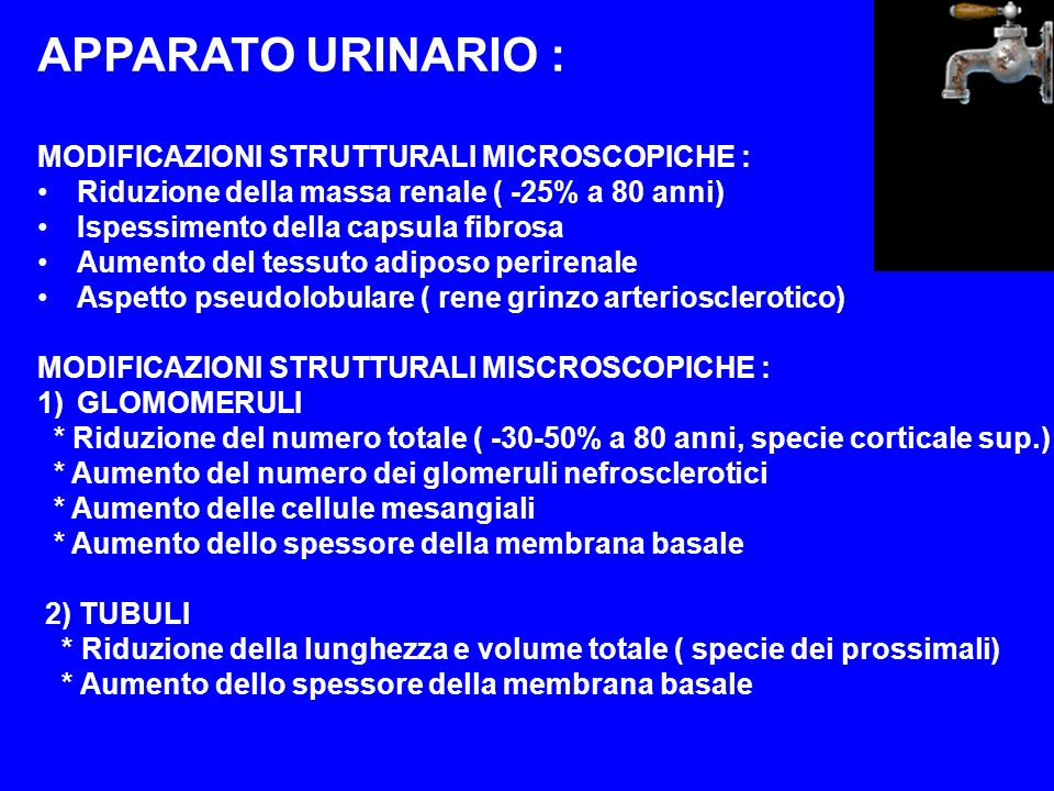 APPARATO URINARIO : MODIFICAZIONI STRUTTURALI MICROSCOPICHE :