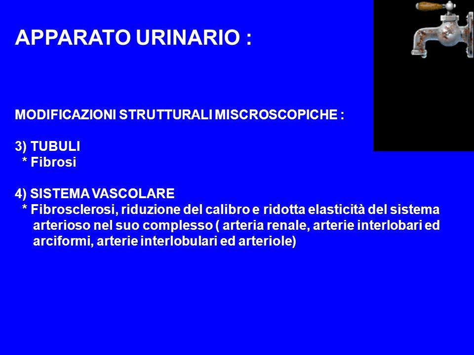 APPARATO URINARIO : MODIFICAZIONI STRUTTURALI MISCROSCOPICHE :