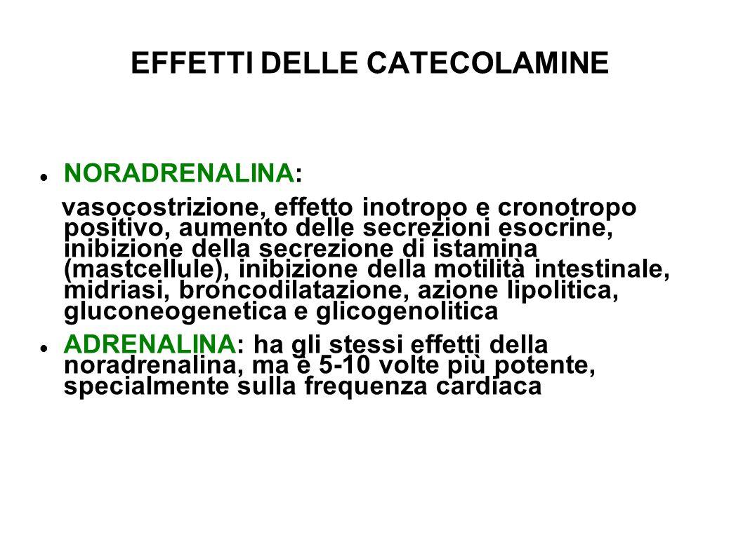 EFFETTI DELLE CATECOLAMINE