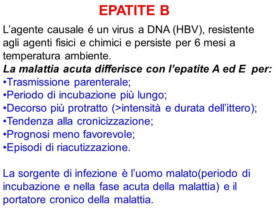EPATITE B L'agente causale é un virus a DNA (HBV), resistente agli agenti fisici e chimici e persiste per 6 mesi a temperatura ambiente.