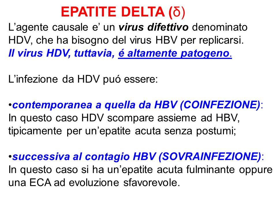 EPATITE DELTA (δ) L'agente causale e' un virus difettivo denominato HDV, che ha bisogno del virus HBV per replicarsi.