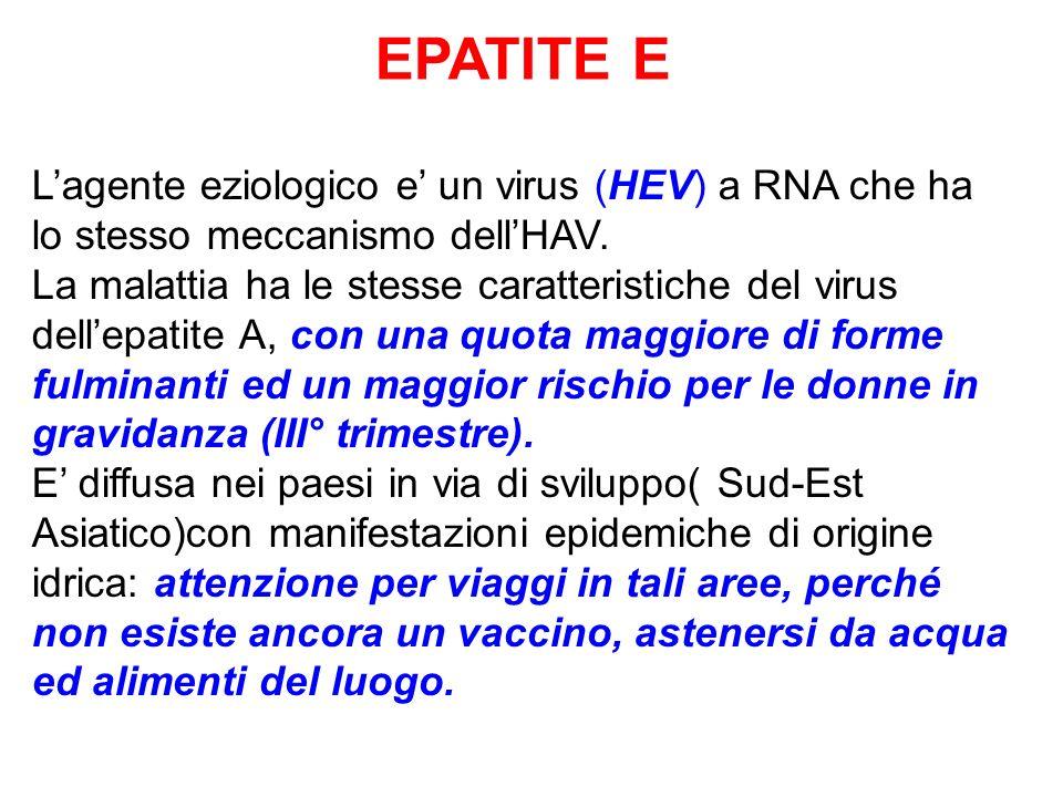 EPATITE E L'agente eziologico e' un virus (HEV) a RNA che ha lo stesso meccanismo dell'HAV.