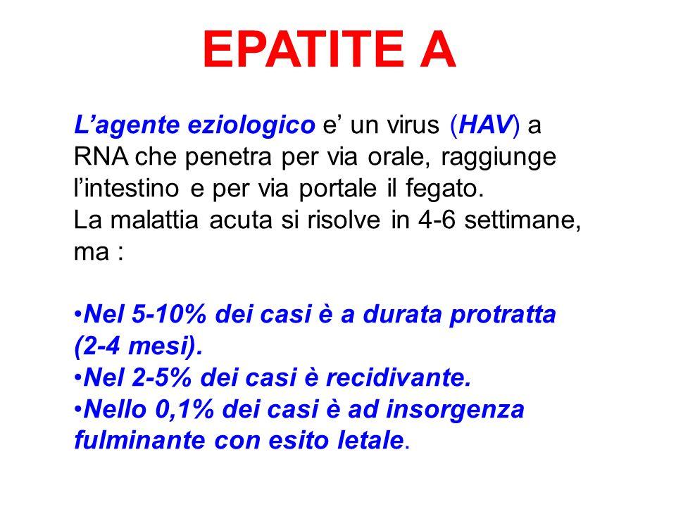 EPATITE A L'agente eziologico e' un virus (HAV) a RNA che penetra per via orale, raggiunge l'intestino e per via portale il fegato.