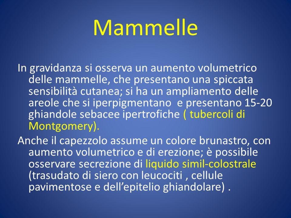 Mammelle
