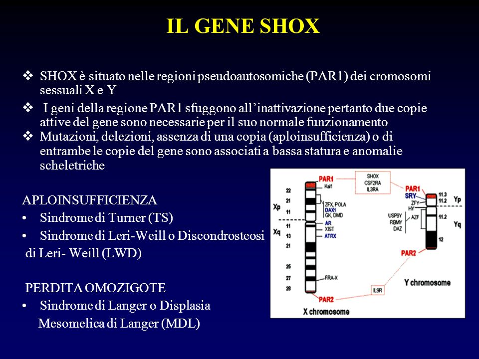 IL GENE SHOX SHOX è situato nelle regioni pseudoautosomiche (PAR1) dei cromosomi sessuali X e Y.