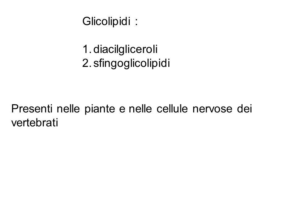 Glicolipidi : diacilgliceroli. sfingoglicolipidi.