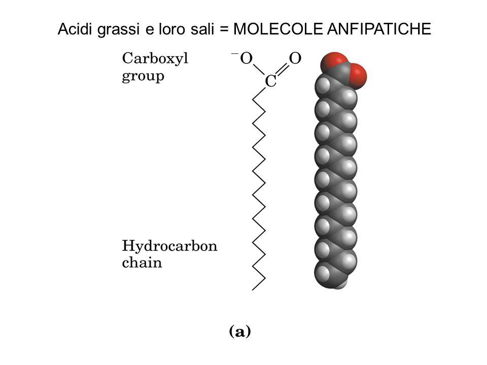 Acidi grassi e loro sali = MOLECOLE ANFIPATICHE