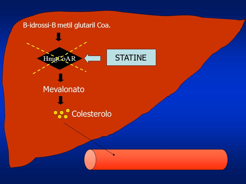STATINE Mevalonato Colesterolo B-idrossi-B metil glutaril Coa.