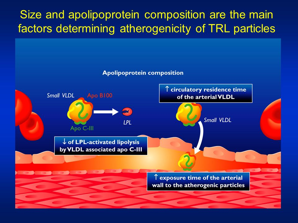 Size and apolipoprotein composition are the main factors determining atherogenicity of TRL particles