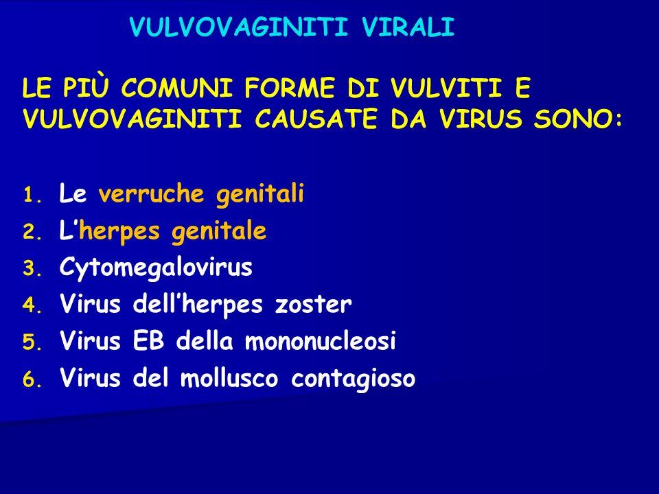 VULVOVAGINITI VIRALI LE PIÙ COMUNI FORME DI VULVITI E VULVOVAGINITI CAUSATE DA VIRUS SONO: Le verruche genitali.