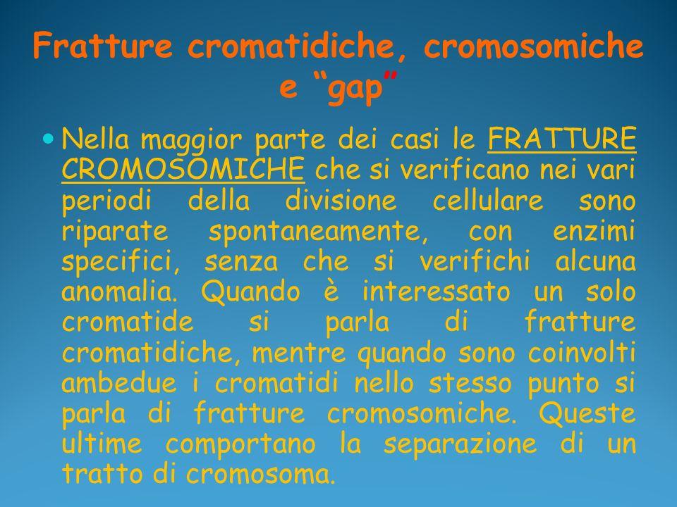 Fratture cromatidiche, cromosomiche e gap