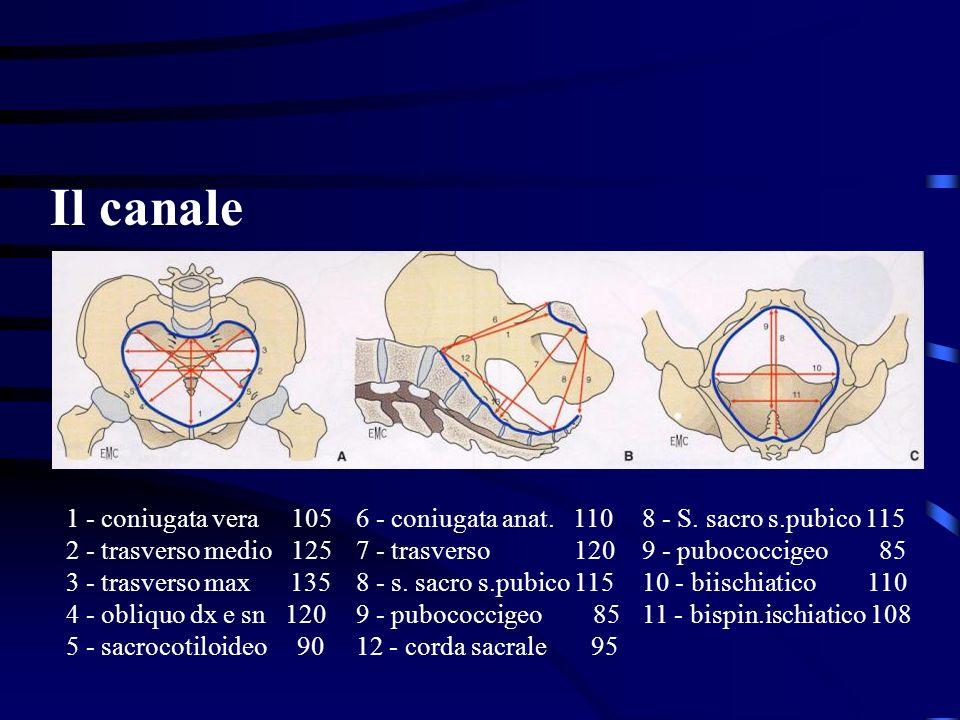 Il canale 1 - coniugata vera 105 2 - trasverso medio 125