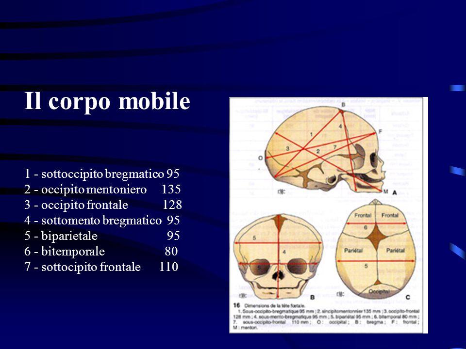 Il corpo mobile 1 - sottoccipito bregmatico 95