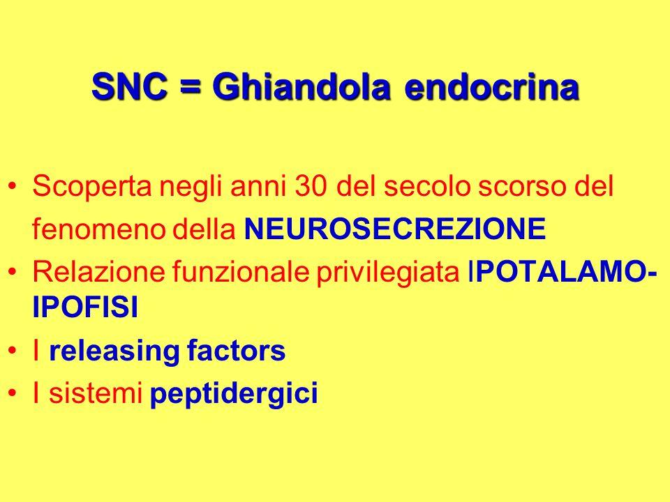SNC = Ghiandola endocrina