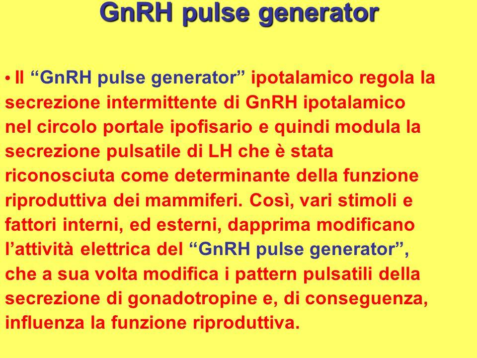 GnRH pulse generator secrezione intermittente di GnRH ipotalamico