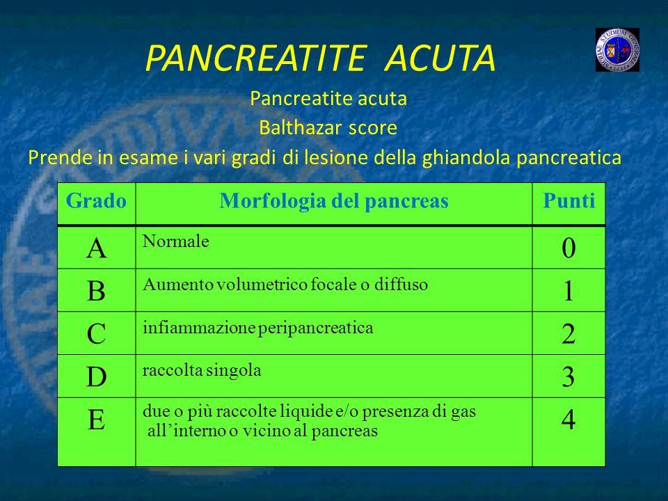 Morfologia del pancreas