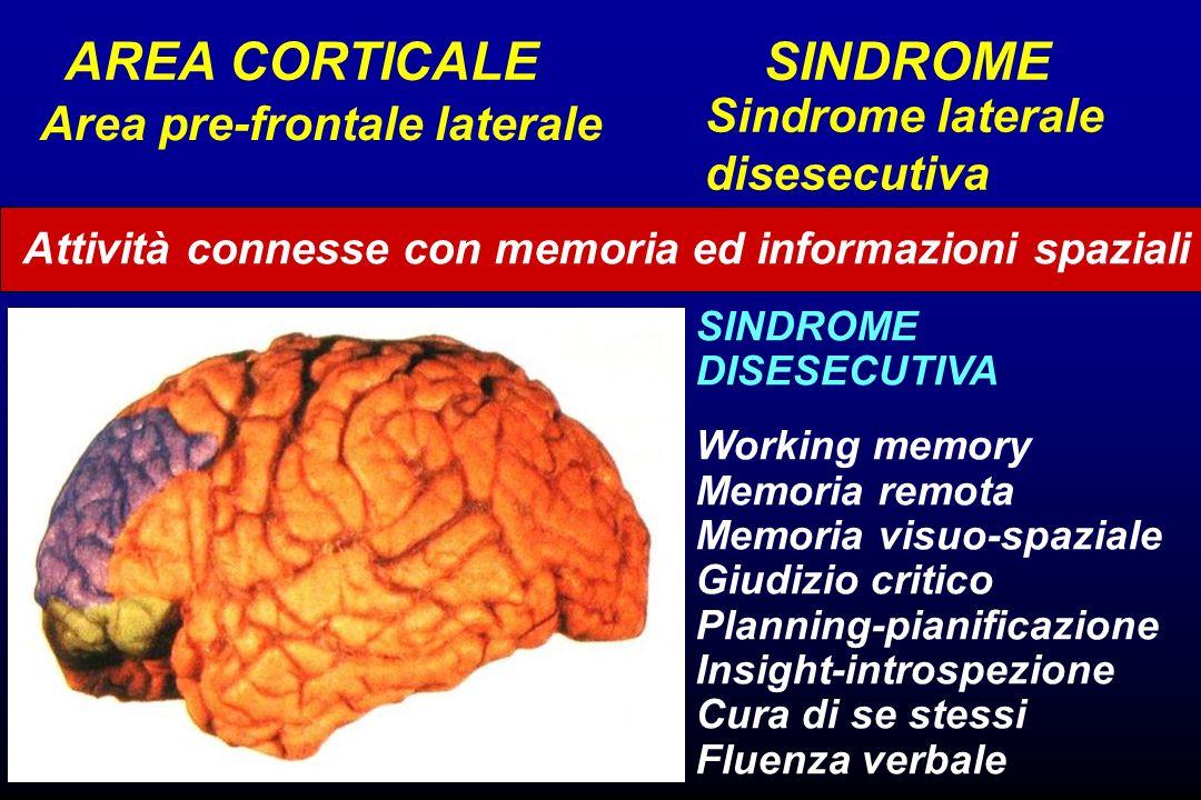 Attività connesse con memoria ed informazioni spaziali