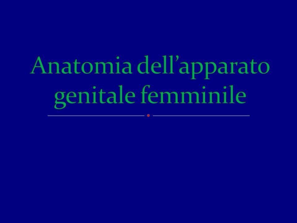 Anatomia dell'apparato genitale femminile