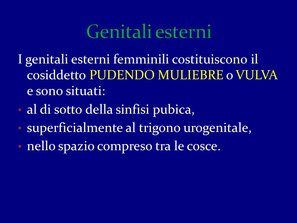 Genitali esterni I genitali esterni femminili costituiscono il cosiddetto PUDENDO MULIEBRE o VULVA e sono situati: