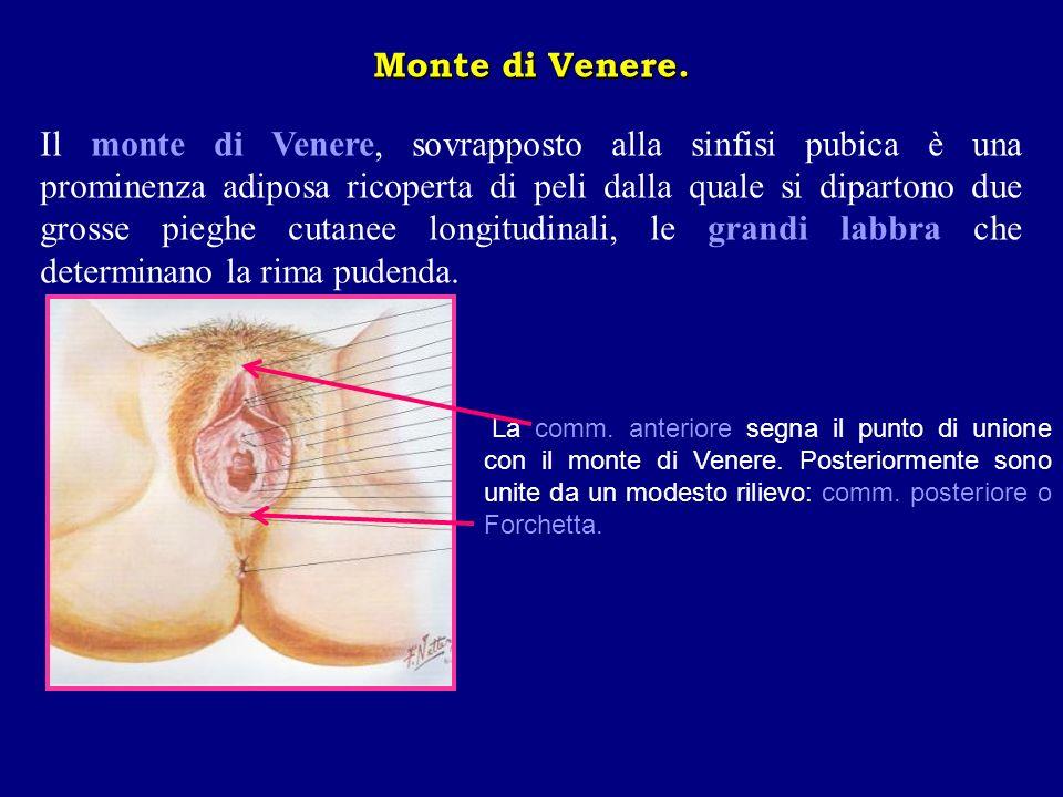 Monte di Venere.