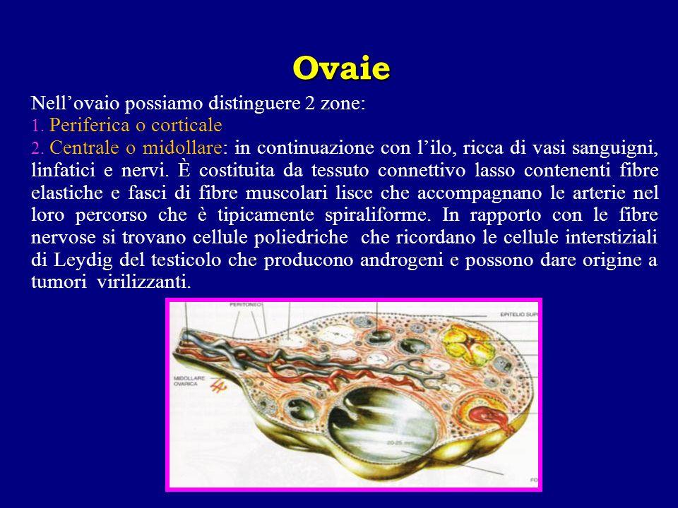 Nell'ovaio possiamo distinguere 2 zone: Periferica o corticale