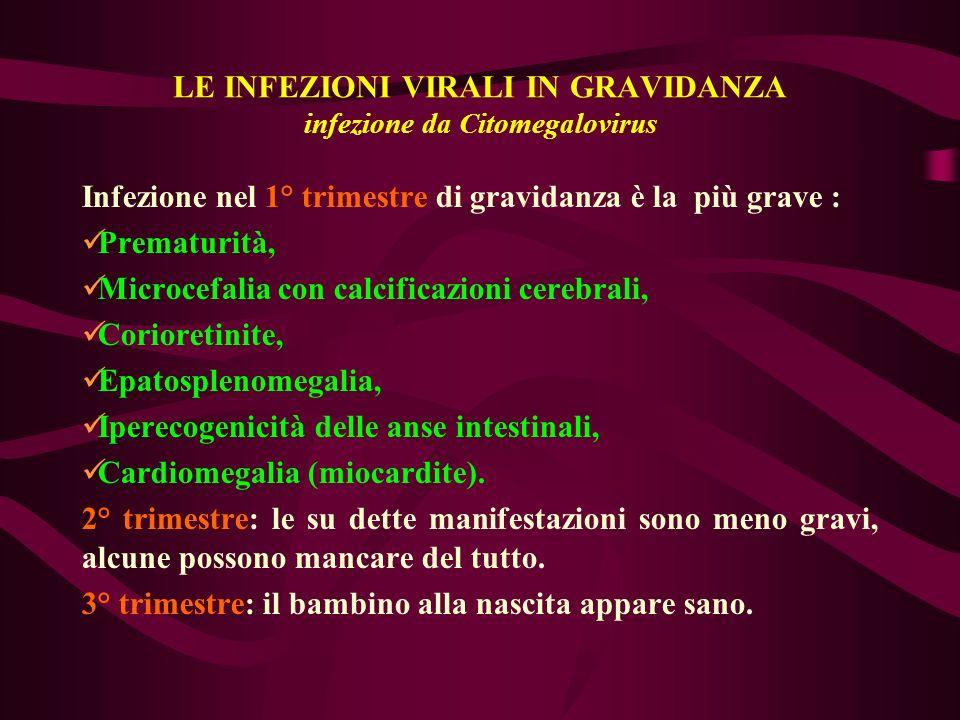 LE INFEZIONI VIRALI IN GRAVIDANZA infezione da Citomegalovirus