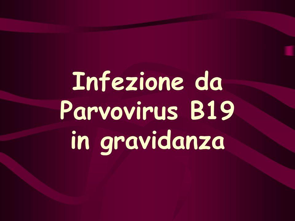 Infezione da Parvovirus B19 in gravidanza