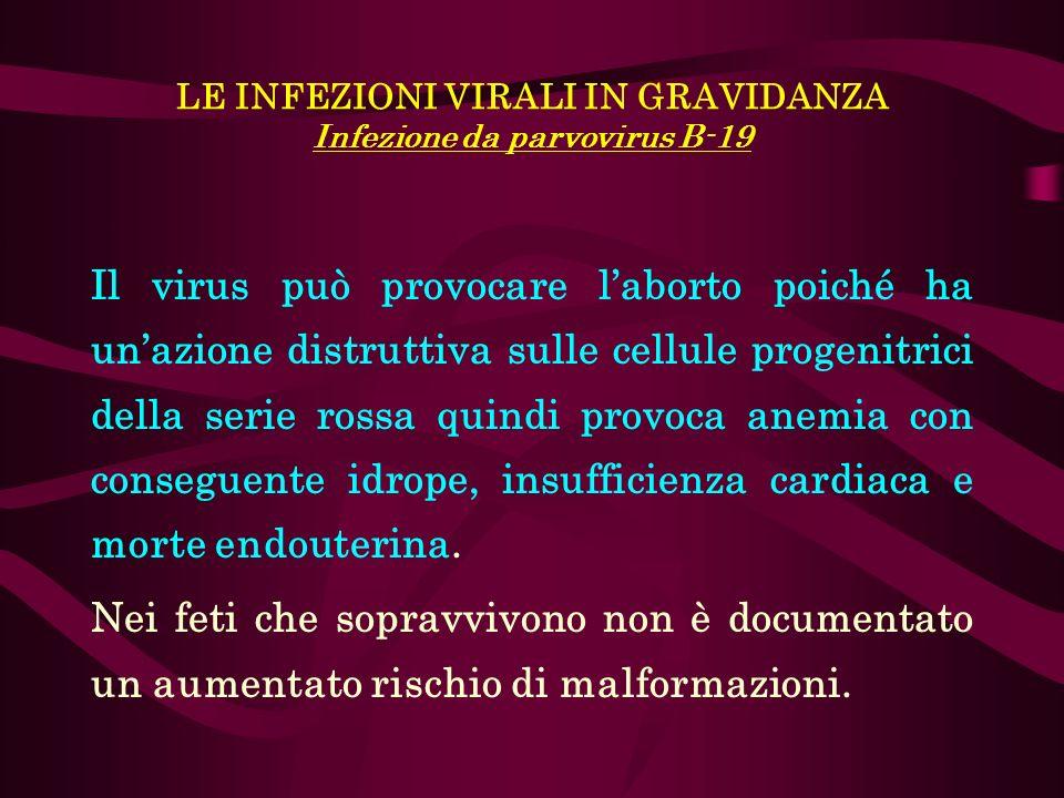 LE INFEZIONI VIRALI IN GRAVIDANZA Infezione da parvovirus B-19