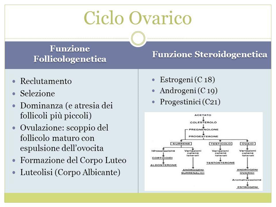 Funzione Follicologenetica Funzione Steroidogenetica