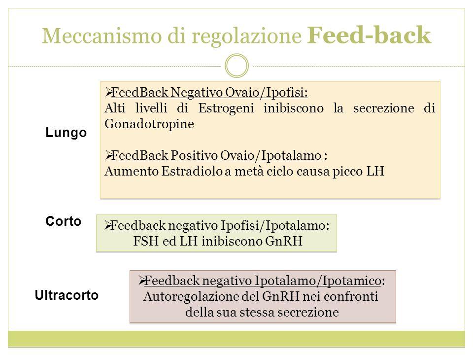 Meccanismo di regolazione Feed-back