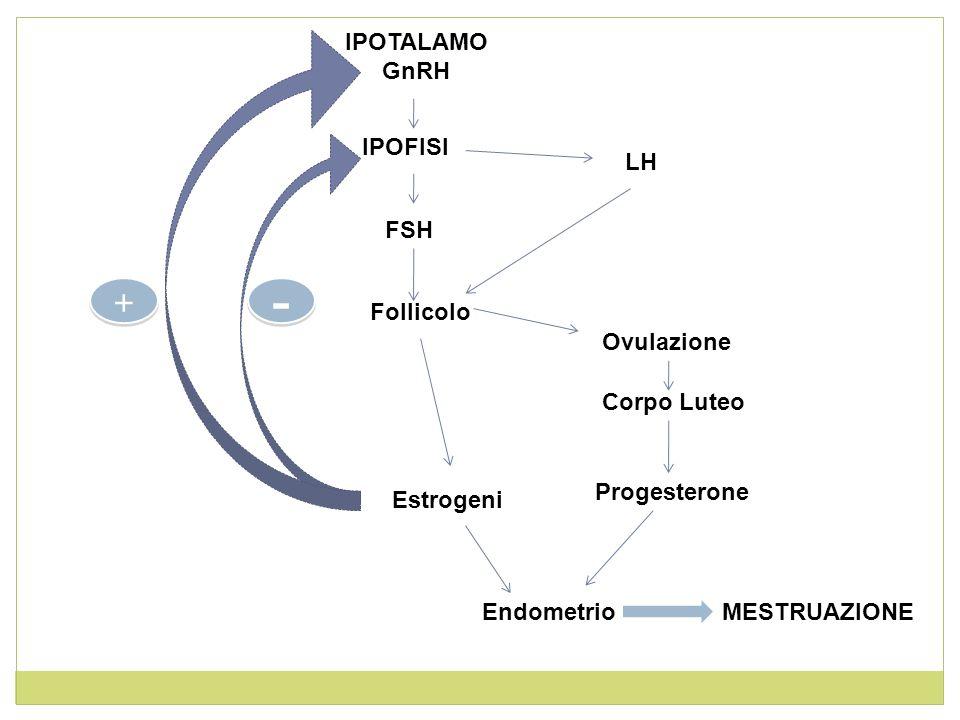- + IPOTALAMO GnRH IPOFISI LH FSH Follicolo Ovulazione Corpo Luteo