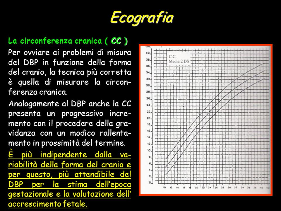 Ecografia La circonferenza cranica ( CC )