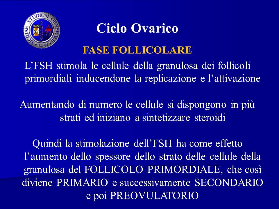 Ciclo Ovarico FASE FOLLICOLARE
