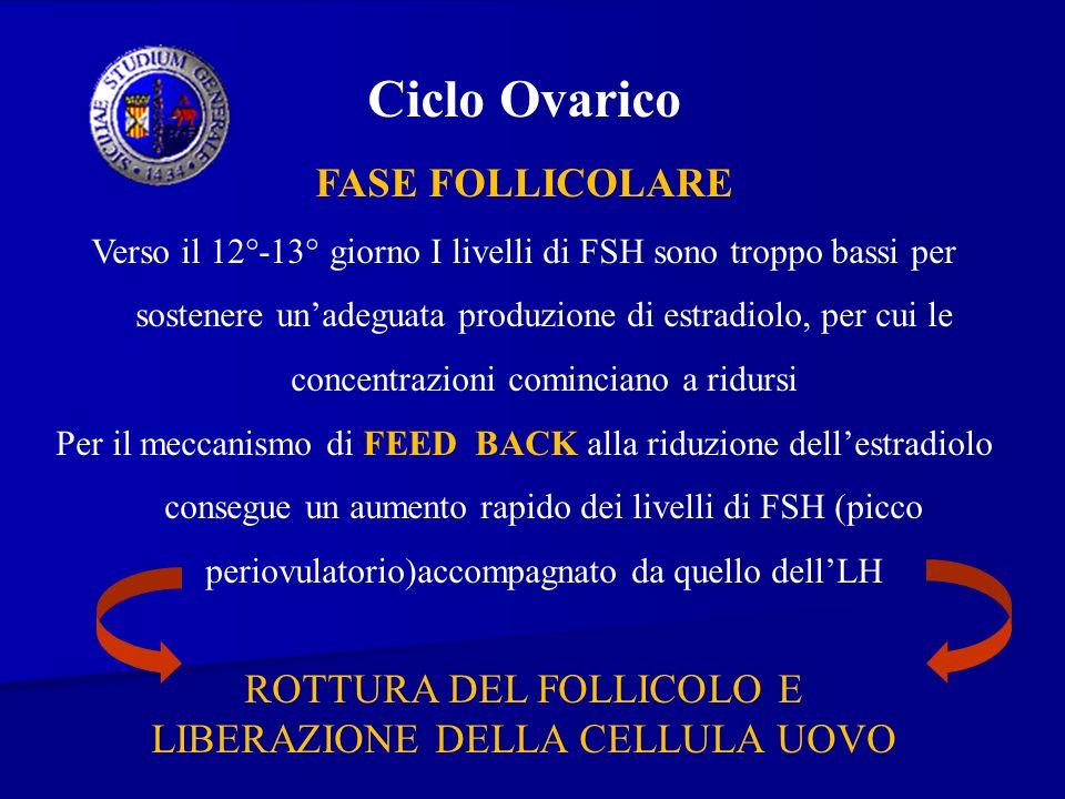 Ciclo Ovarico FASE FOLLICOLARE ROTTURA DEL FOLLICOLO E