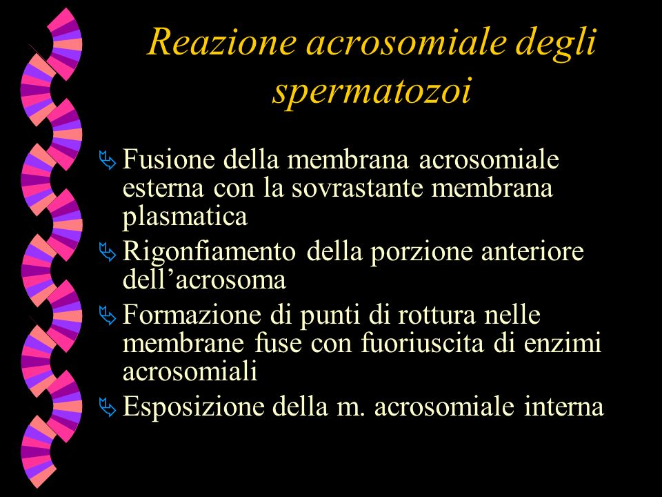 Reazione acrosomiale degli spermatozoi