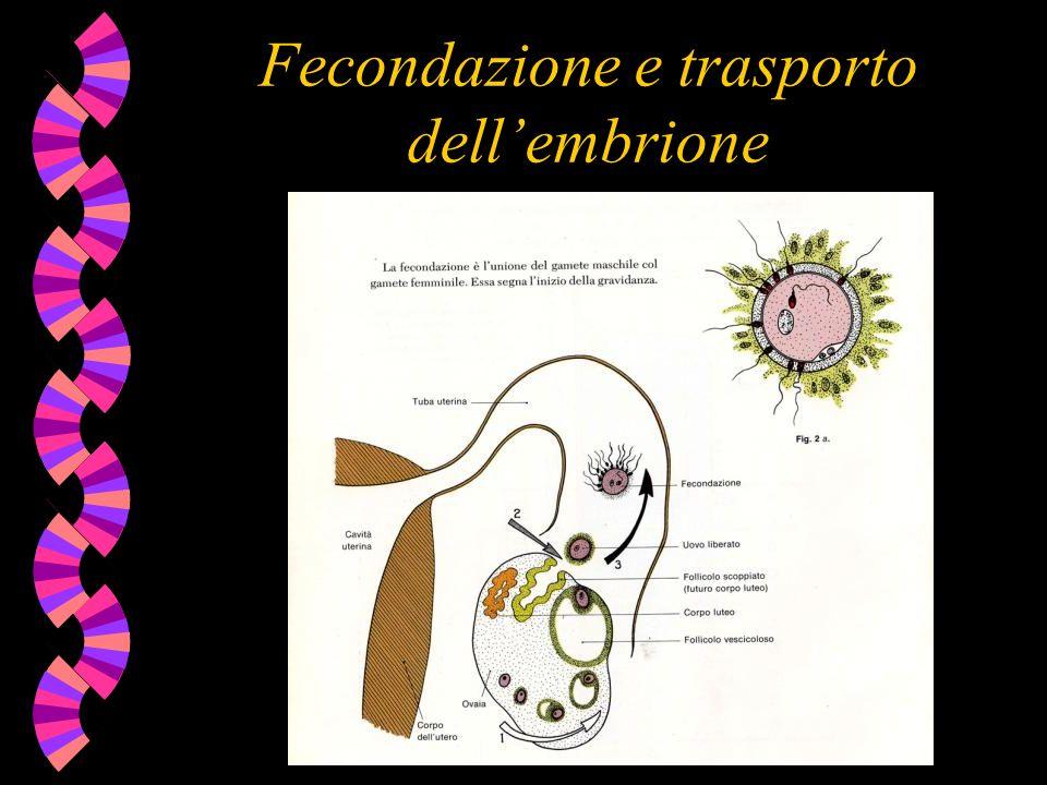 Fecondazione e trasporto dell'embrione