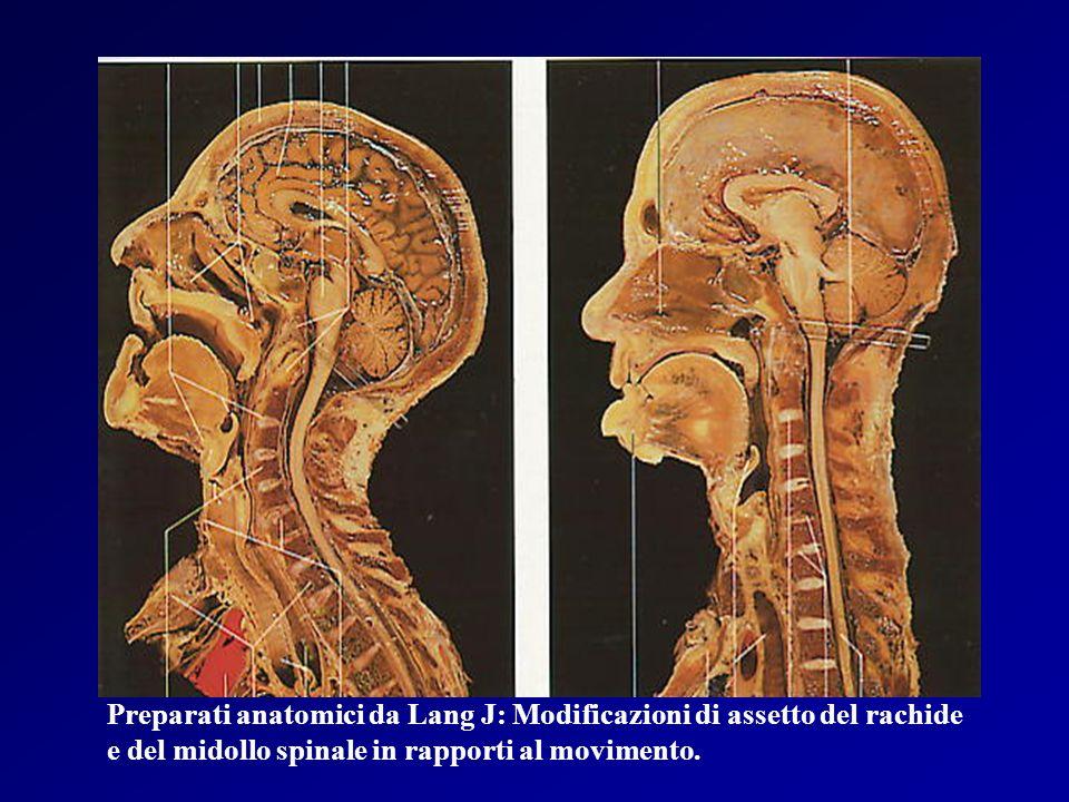 Preparati anatomici da Lang J: Modificazioni di assetto del rachide
