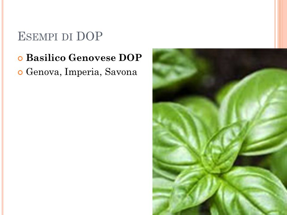 Esempi di DOP Basilico Genovese DOP Genova, Imperia, Savona