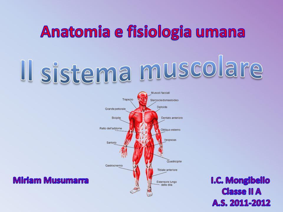 Anatomia e fisiologia umana Miriam Musumarra I.C. Mongibello