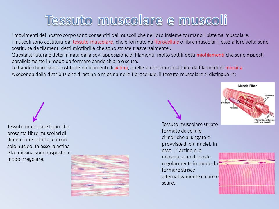 Tessuto muscolare e muscoli