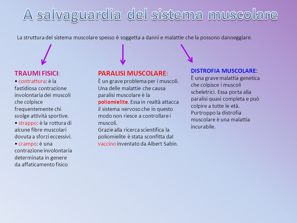 A salvaguardia del sistema muscolare