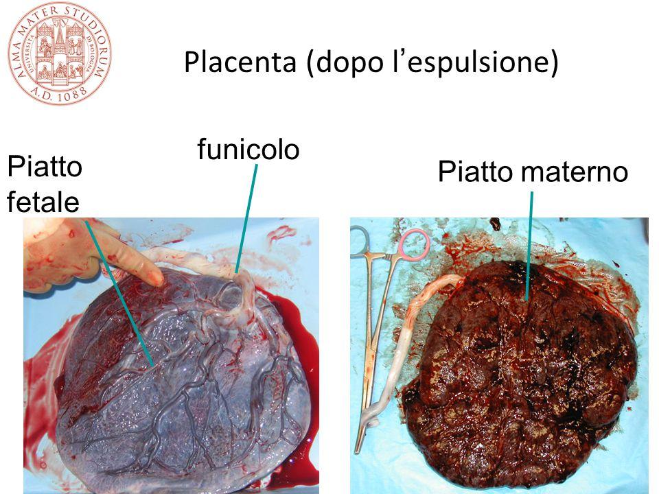 Placenta (dopo l'espulsione)