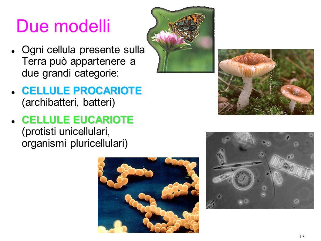 Due modelliOgni cellula presente sulla Terra può appartenere a due grandi categorie: CELLULE PROCARIOTE (archibatteri, batteri)