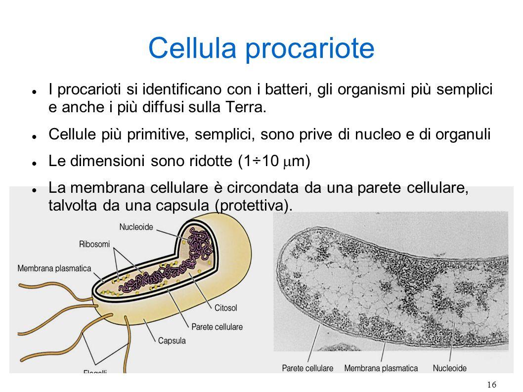 Cellula procariote I procarioti si identificano con i batteri, gli organismi più semplici e anche i più diffusi sulla Terra.