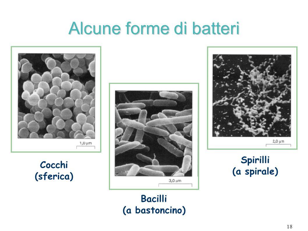 Alcune forme di batteri