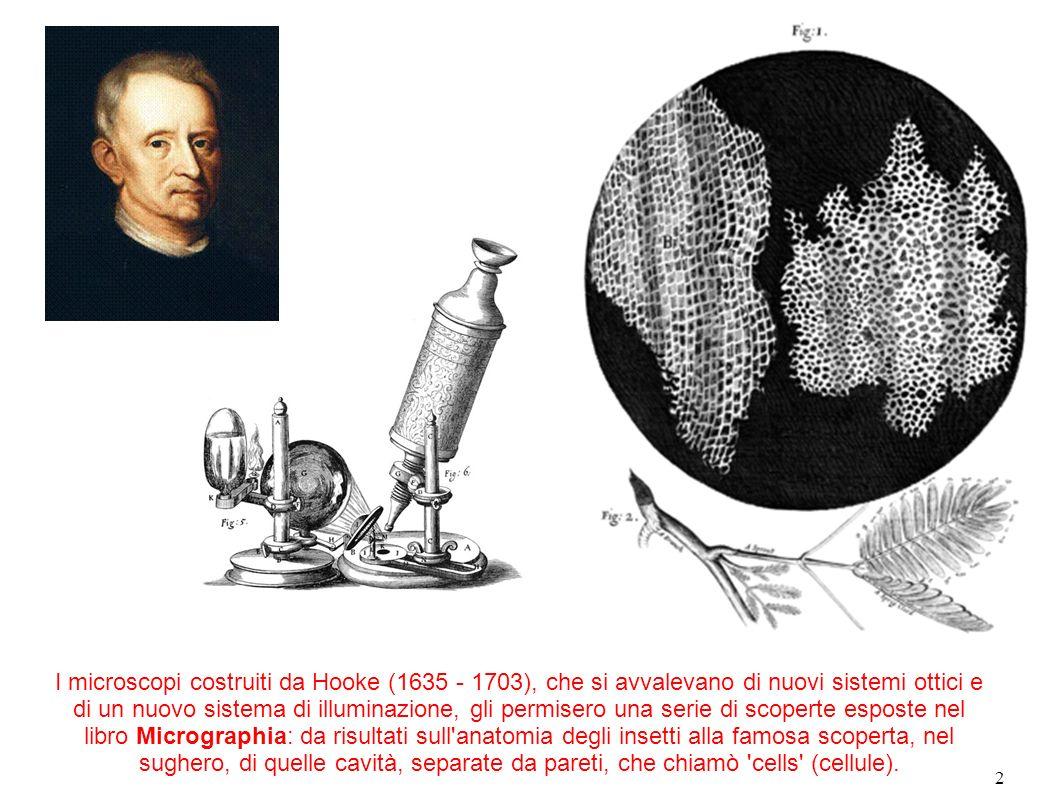 I microscopi costruiti da Hooke (1635 - 1703), che si avvalevano di nuovi sistemi ottici e di un nuovo sistema di illuminazione, gli permisero una serie di scoperte esposte nel libro Micrographia: da risultati sull anatomia degli insetti alla famosa scoperta, nel sughero, di quelle cavità, separate da pareti, che chiamò cells (cellule).
